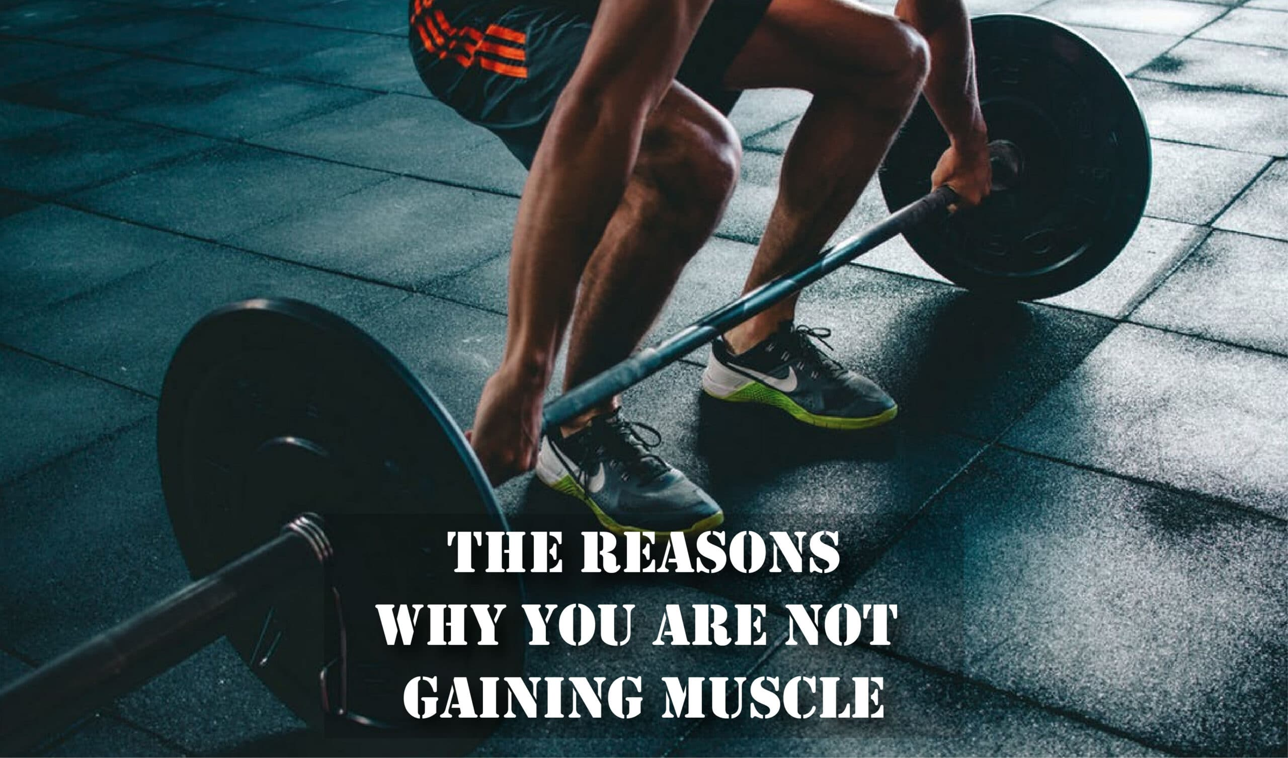 The Reasons Why You Are Not Gaining Muscle